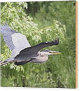 Great Blue Flight Wood Print