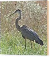 Great Blue Heron - Ardea Herodias Wood Print