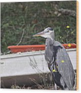Great Blue Heron - Chicken Of The Sea Wood Print