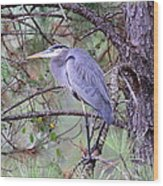Great Blue Heron - Happy Place Wood Print