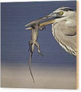 Great Blue Heron Ardea Herodias Preying Wood Print