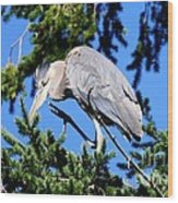 Great Blue Heron Concentration Wood Print