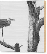 Great Blue Heron - Dead Pine Wood Print