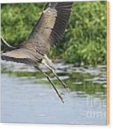 Great Blue Heron Escape Wood Print