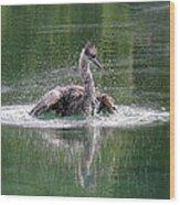 Great Blue Heron Having A Bath Wood Print