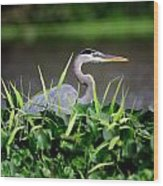 Great Blue Heron Hiding In The Grasses Wood Print