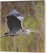 Great Blue Heron In Flight II Wood Print