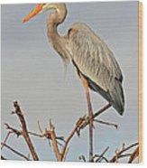 Great Blue Heron In Habitat Wood Print