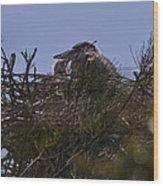 Great Blue Heron In Nest Wood Print