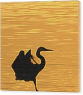 Great Blue Heron Landing In Golden Light Wood Print