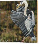 Great Blue Heron Landing Wood Print