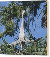 Great Blue Heron Meditation Pacific Northwest Wood Print