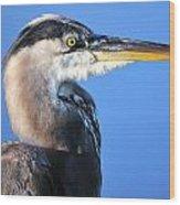 Great Blue Heron Portrait Blue Wood Print