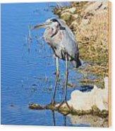 Great Blue Heron Resting Wood Print