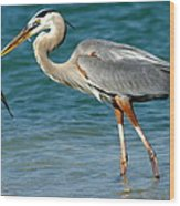 Great Blue Heron With Catch Wood Print