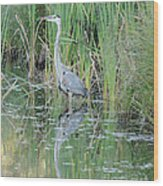 Great Blue Heron With Reflection Wood Print