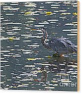 Great Blue Heron With Snack Wood Print