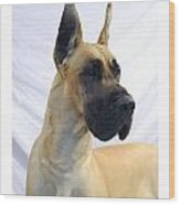 Great Dane 253 Wood Print