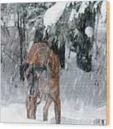 Great Dane Rufus Looking Into A Blizzard Wood Print