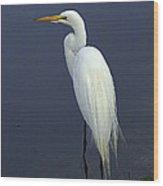 Great Egret 2 Wood Print
