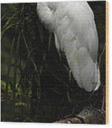 Great Egret 3 Wood Print