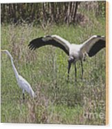 Great Egret And Wood Stork In The Marsh Wood Print