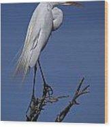 Great Egret, Casmerodius Albus, Perched Wood Print