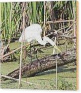 Great Egret Hunting Wood Print
