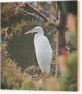 Great Egret  In Cypress Wood Print