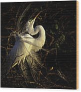Great Egret In Great Light Wood Print