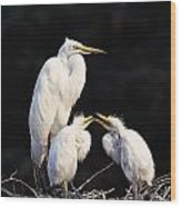 Great Egret In Nest With Young Wood Print