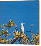 Great Egret On Watch Wood Print