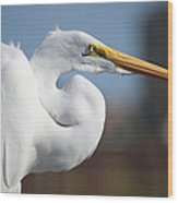 Great Egret Portrait Wood Print