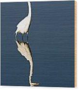 Great Egret Reflected Wood Print