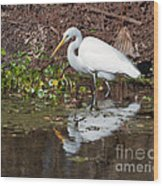 Great Egret Searching For Food In The Marsh Wood Print