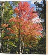 Great Fall Tree Wood Print