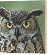 Great Horned Owl Bubo Virginianus Wood Print
