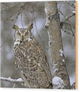 Great Horned Owl In Its Pale Form Wood Print by Tim Fitzharris