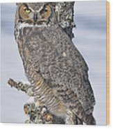 Great Horned Owl Portrait Wood Print