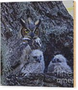 Great Horned Owl Twins Wood Print