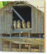 Great Horned Owls Wood Print