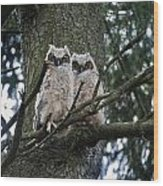 Great Horned Owls Young Wood Print