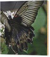 Great Mormon Butterfly Wood Print
