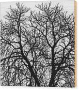 Great Old Tree Wood Print