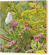 Great Southern White Butterfly Likes The Pink Flowers Wood Print