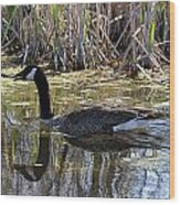 Great Swamp Goose  Wood Print