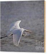 Great White Egret Flight Series - 1 Wood Print