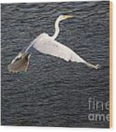 Great White Egret Flight Series - 10 Wood Print