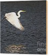 Great White Egret Flight Series - 11 Wood Print