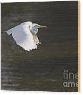 Great White Egret Flight Series - 3 Wood Print